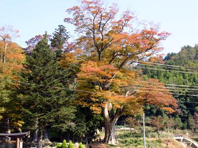20051106_02.jpg