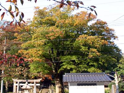 20051106_05.jpg